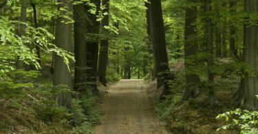 Forêt de Soignes à Bruxelles