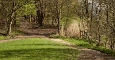 Bois du Laerbeek à Bruxelles
